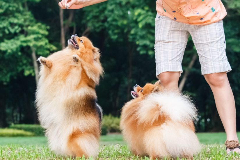 Bow Wow Doggy Daycare Stratford upon Avon The Cotswolds