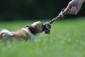 dog-boarding-stratford-upon-avon-warwickshire