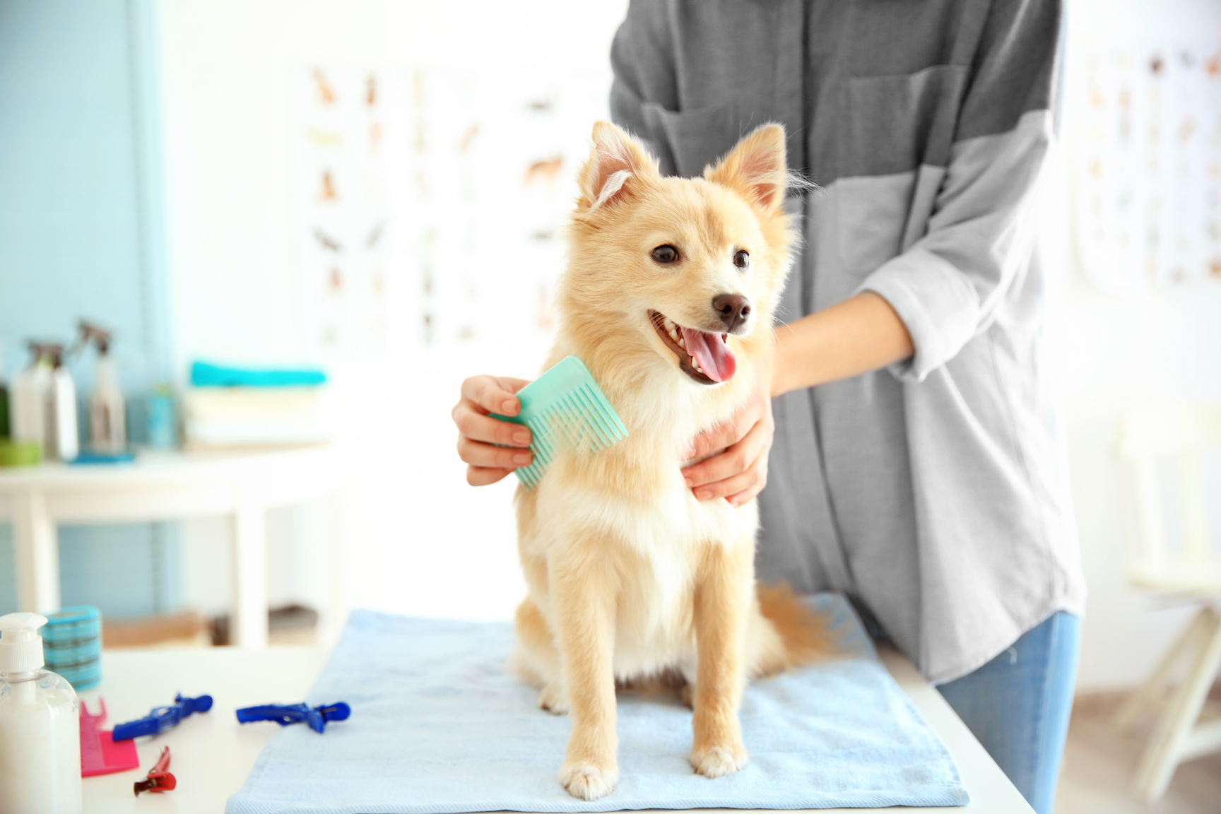 Simple Spring Cleaning Tips To Groom Your Pet! - Animal Fair |Dogs Grooming