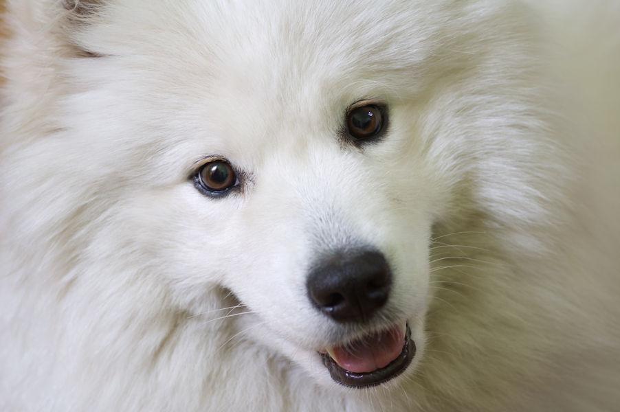 dog-grooming-stratford-on-avon-warwickshire-1