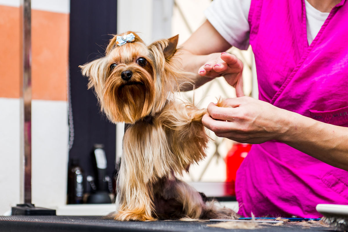 dog-grooming-stratford-upon-avon-cotswolds-1